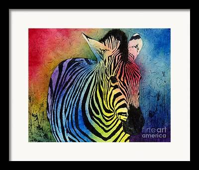 Prints Of Zebras Framed Prints