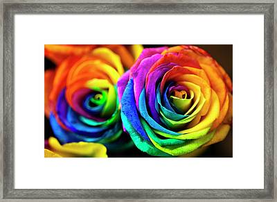 Rainbowed Roses Framed Print by Ian Gowland
