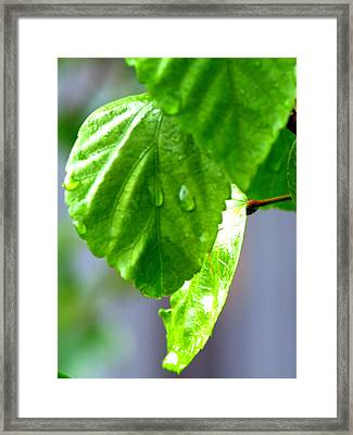 Framed Print featuring the photograph Raindrop On Roses by Cathy Shiflett