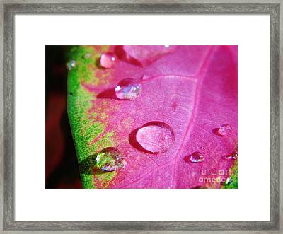 Raindrop On The Leaf Framed Print by D Hackett