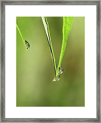 Raindrop Reflection Framed Print by Dan Sproul