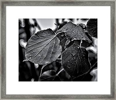 Raindrops After The Storm Framed Print by Brian Carson