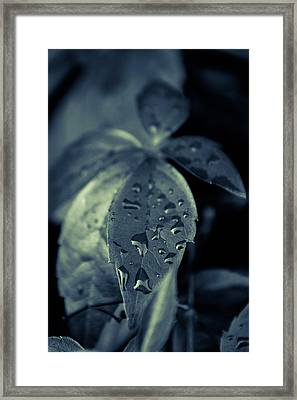 Raindrops Framed Print by Andreas Levi