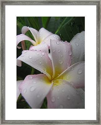 Framed Print featuring the photograph Raindrops by Beth Vincent