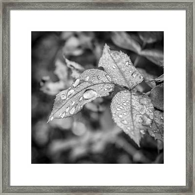 Raindrops Framed Print by Carolyn Marshall