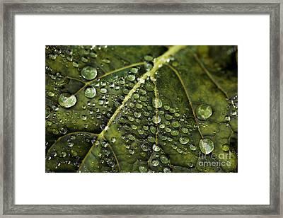 Raindrops Framed Print by Dennis Bucklin