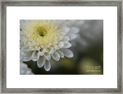 Raindrops Holding Tight Framed Print