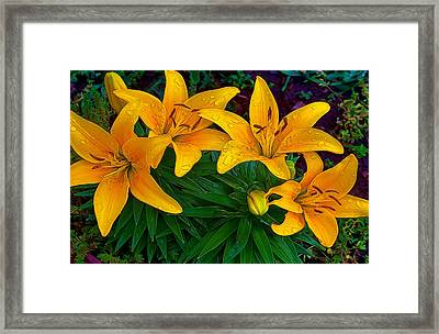 Raindrops Framed Print by Julie Grace