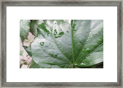 Raindrops Keep Falling... Framed Print