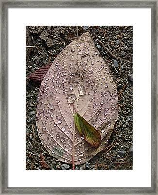 Raindrops On A Leaf Framed Print by Janet Ashworth