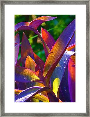 Raindrops On Colored Leaves Framed Print