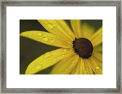 Raindrops On Daisy Framed Print