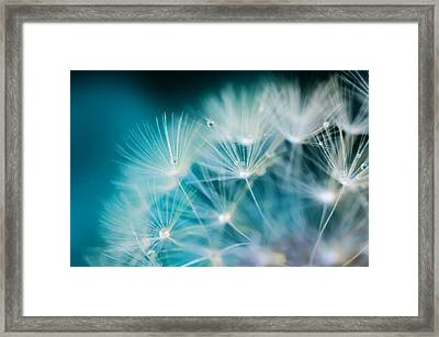 Raindrops On Dandelion Sea Blue Framed Print
