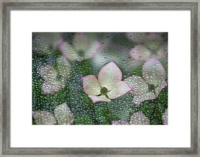 Raindrops On Glass With A View Of Pink Framed Print by Debra Brash