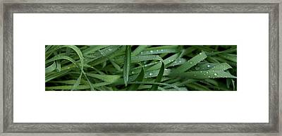 Raindrops On Grass Framed Print by Panoramic Images