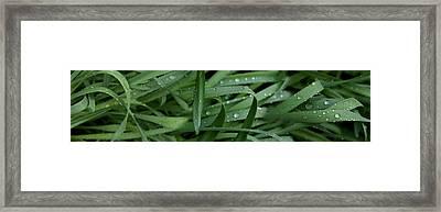 Raindrops On Grass Framed Print