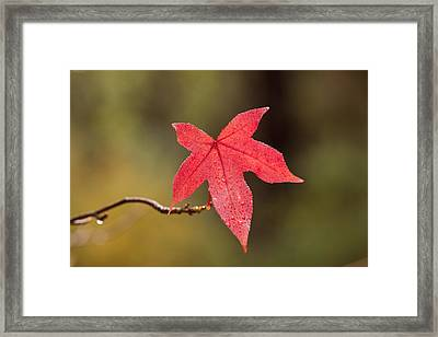 Raindrops On Red Fall Leaf Framed Print by Michelle Wrighton