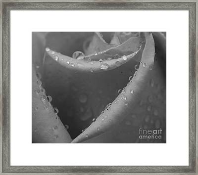 Framed Print featuring the photograph Raindrops On Rose 2 by Inge Riis McDonald