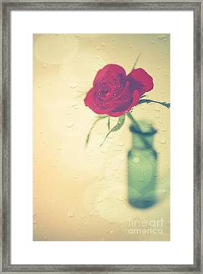 Raindrops On Roses . . . Framed Print by Jan Bickerton