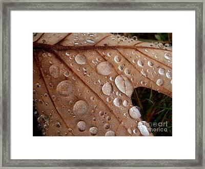 Raindrops  Framed Print by Steven Valkenberg