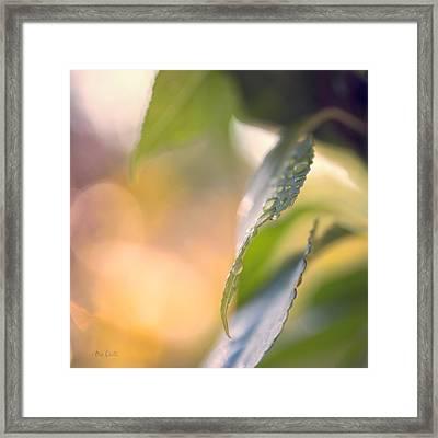 Raindrops Three Framed Print by Bob Orsillo