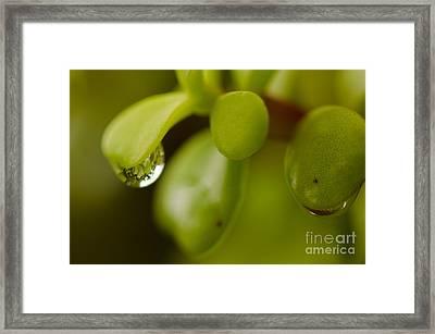 Raindrops V Framed Print