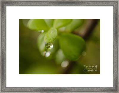 Raindrops Vi Framed Print