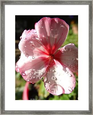 Rained On Framed Print by Jen Sparks
