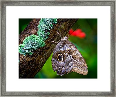 Rainforest Butterfly Framed Print by Mark Andrew Thomas
