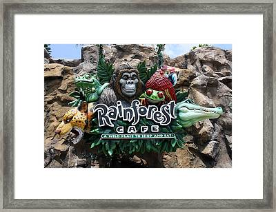 Rainforest Framed Print by David Nicholls