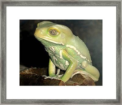 Rainforest Frog Framed Print