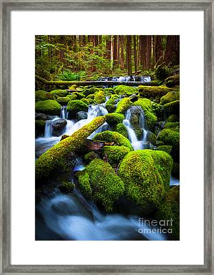 Rainforest Magic Framed Print by Inge Johnsson