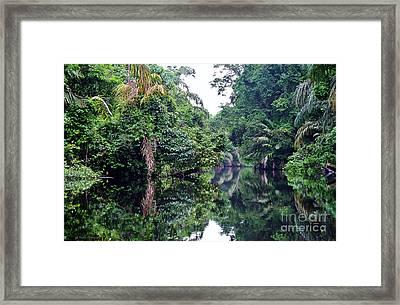 Rainforest Magic Framed Print