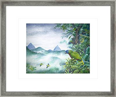Rainforest Realm - St. Lucia Parrots Framed Print by Christopher Cox