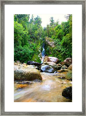 Framed Print featuring the photograph Rainforest Stream New Zealand by Amanda Stadther