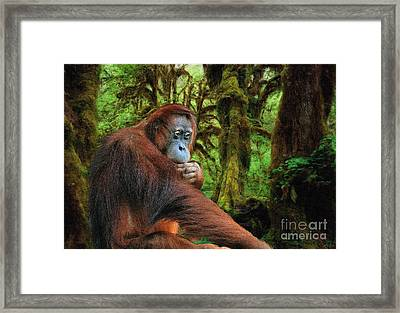 Rainforest Thoughts Framed Print