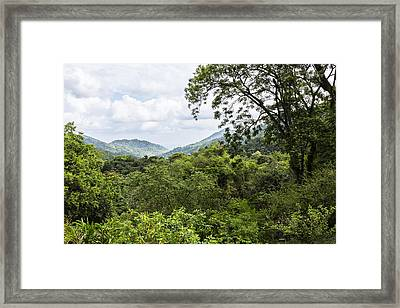 Rainforest Trinidad West Indies Framed Print by Konrad Wothe
