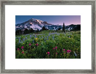 Rainier Flowering Meadow Framed Print