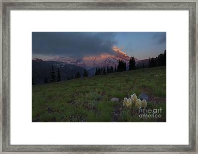 Rainier Revealed Framed Print