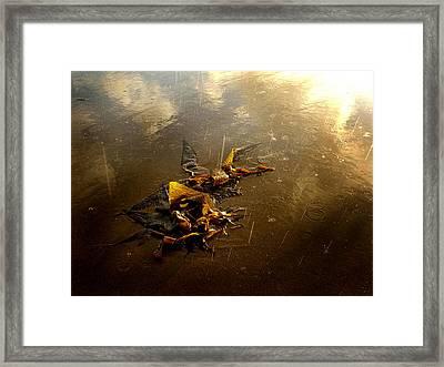 Rainkelp Framed Print