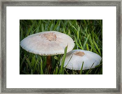Rain's Child 1 Framed Print