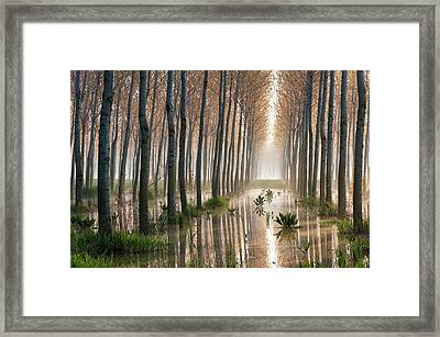 Rains Of Spring Framed Print