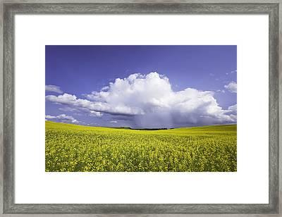 Rainstorm Over Canola Field Crop Framed Print by Ken Gillespie