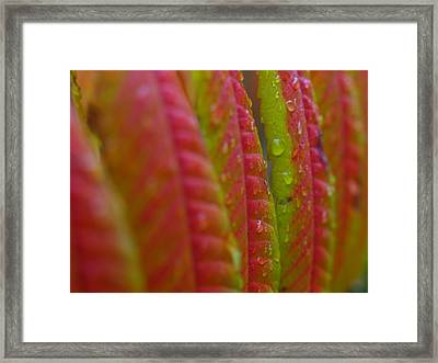 Rainy Aftermath Framed Print by Juergen Roth