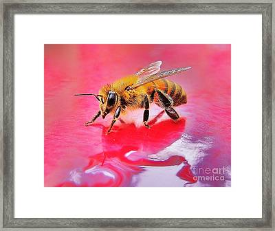 Rainy Day Bee Framed Print by John King