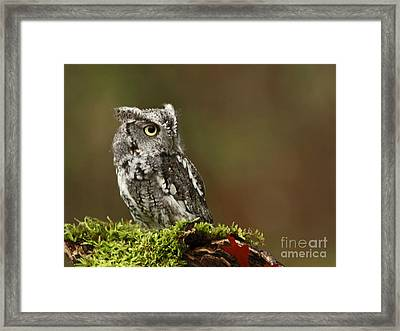 Rainy Day Eastern Screech Owl Framed Print