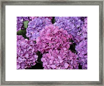 Framed Print featuring the photograph Rainy Day Flowers by Ira Shander