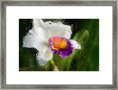 Rainy Day Orchid - Botanical Art By Sharon Cummings Framed Print by Sharon Cummings