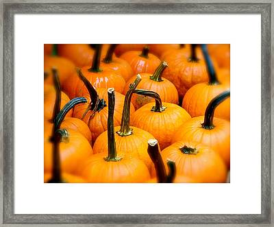 Framed Print featuring the photograph Rainy Day Pumpkins by Ira Shander