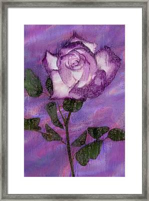 Rainy Day Rose Framed Print by Jack Zulli